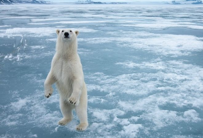 Αρκτική – Ανταρκτική